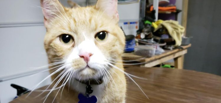 Shiloe – 10 year old male cat. Likes dogs. He's quite a character, affectionate, energetic and inquisitive.